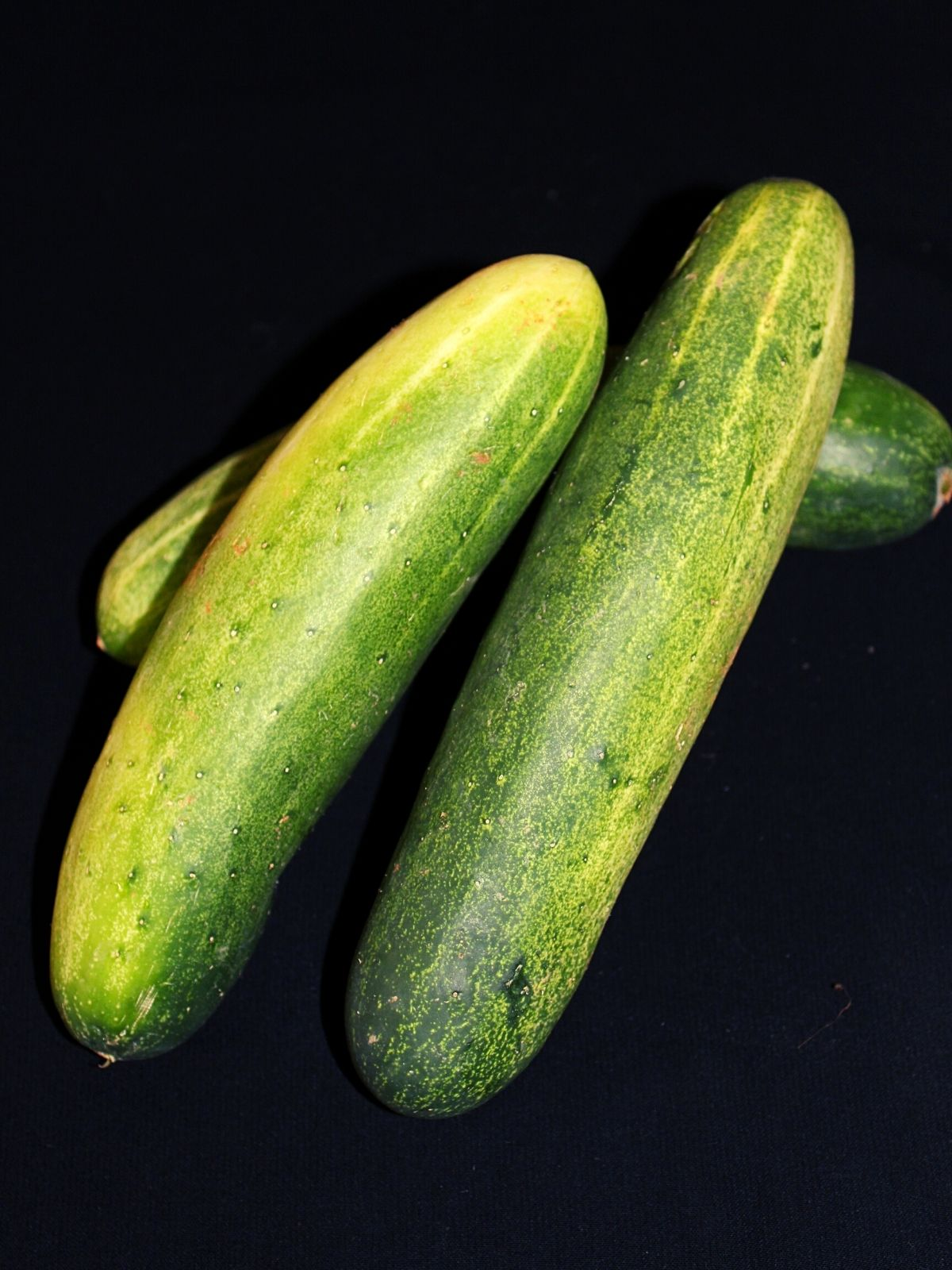 showing three big size cucumbers placed on each other on a mat